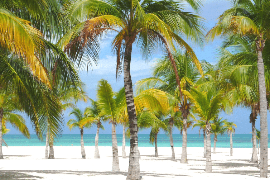 Passion Island Beach, Cozumel Isla Passion one of the best beaches in cozumel