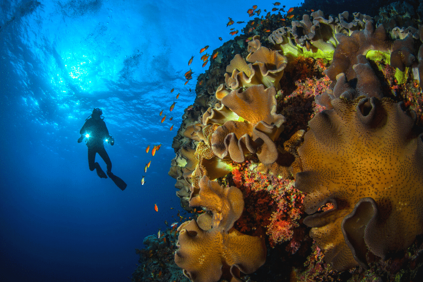 Diving in Cozumel, Mexico
