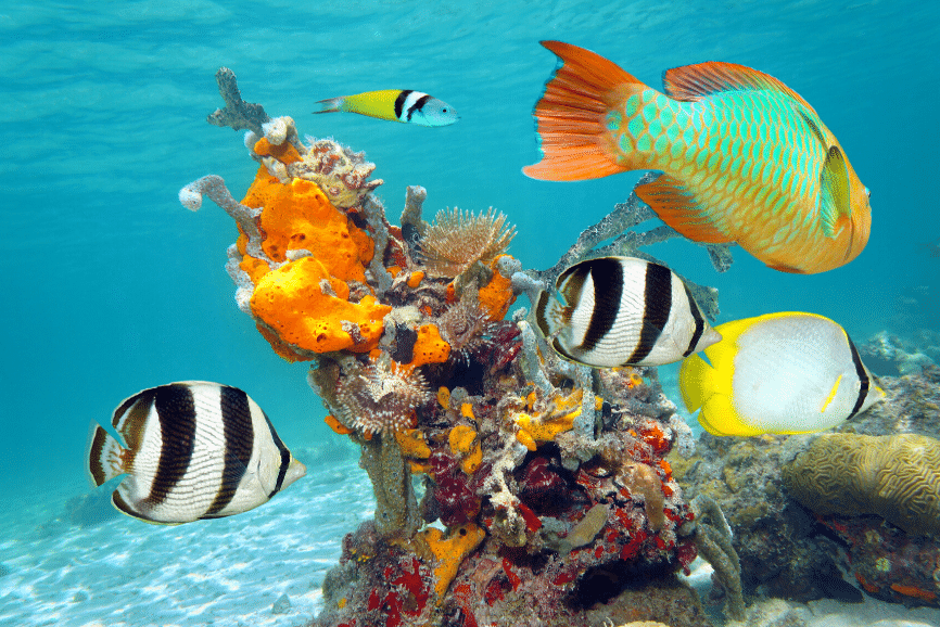 Snorkeling And Diving In Cozumel