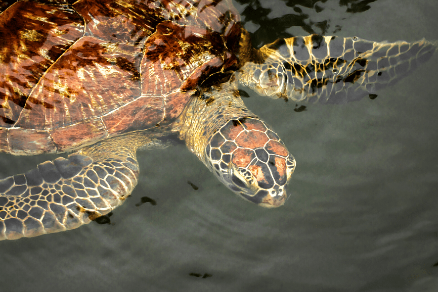 Tortugranja Turtle Sanctuary