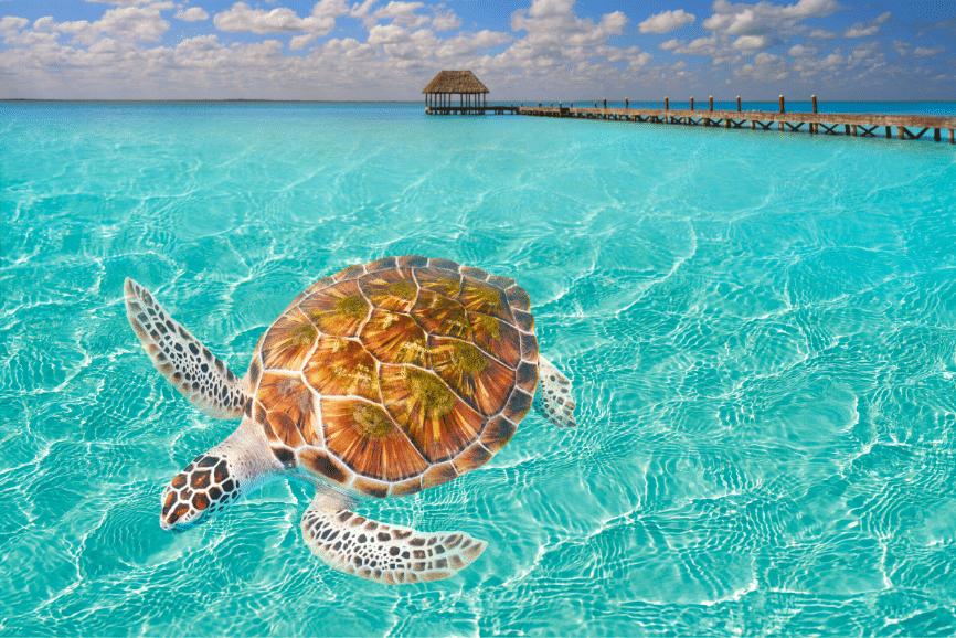 Cancun Turtle