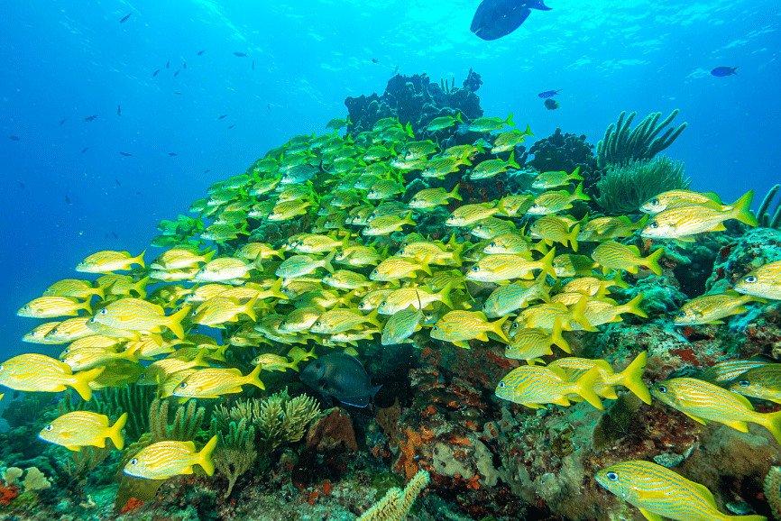 Diving in Cozumel. Cozumel Dive Sites.