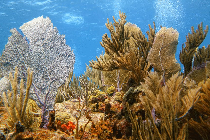 On the Reef. Scuba diving in Cozumel