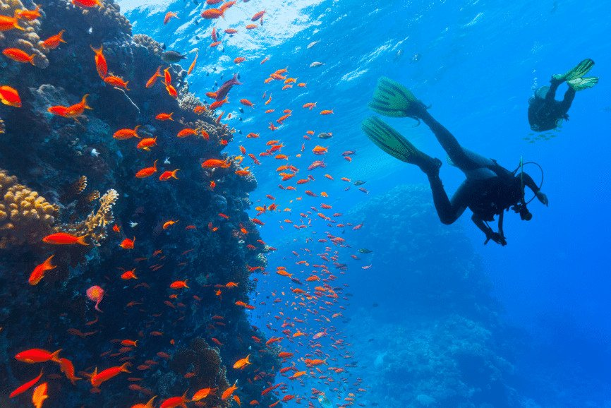 Cozumel scuba diving. dive in cozumel. scuba diving in cozumel