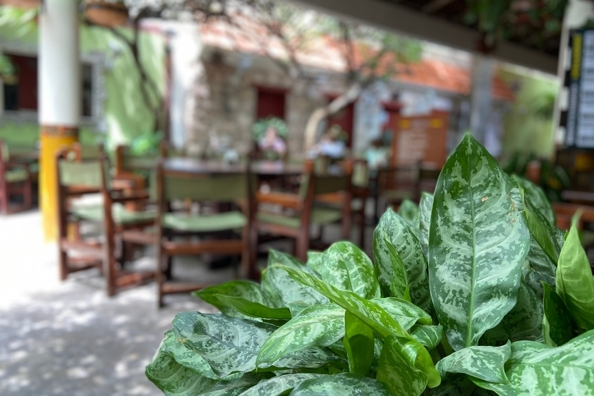 One of the best restaurants in Cozumel in our Cozumel restaurant guide
