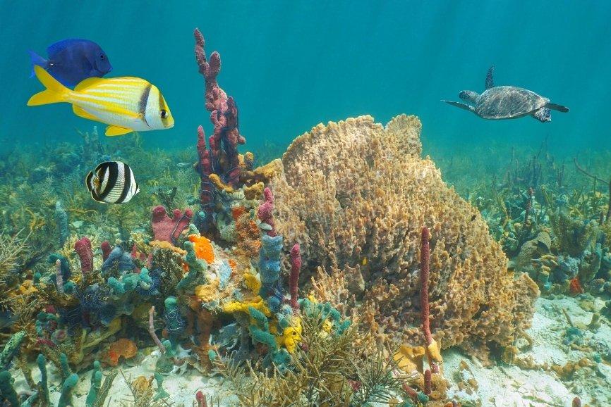 Cozumel diving, cozumel dive shops