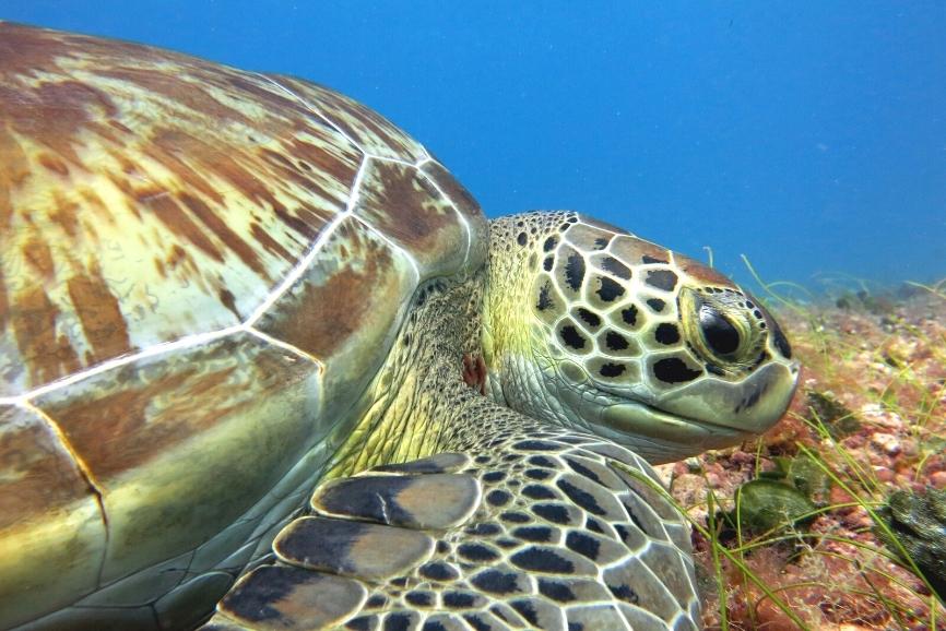 Cozumel Diving. the best scuba diving in Cozumel. Dive Cozumel