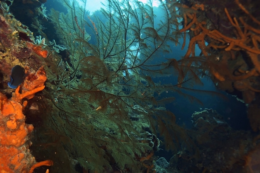Cozumel Diving Guide and the best scuba diving in Cozumel.