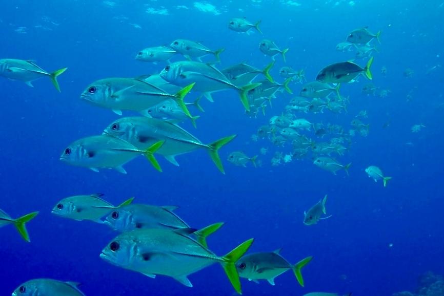 Cozumel snorkeling guide, the best snorkeling in cozumel.